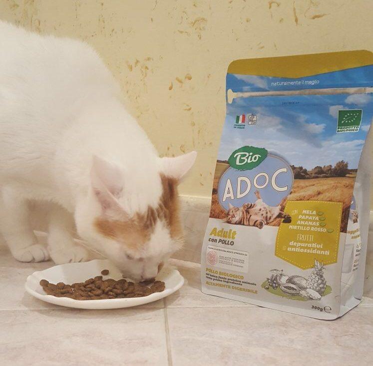 cosa mangia il mio gatto adoc