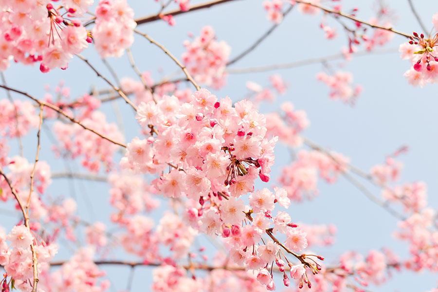 primavera-come-aumentare-il-sistema-immunitario